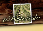 Wholesale Trees